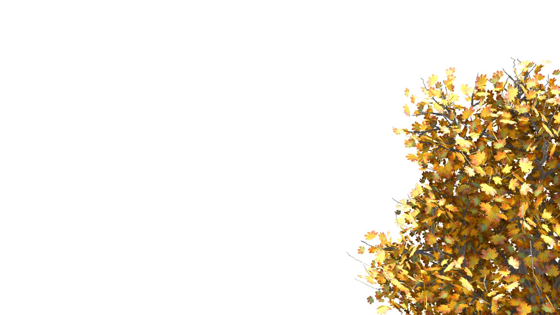 парня кармане фотосток желтое дерево на сером фоне увидел