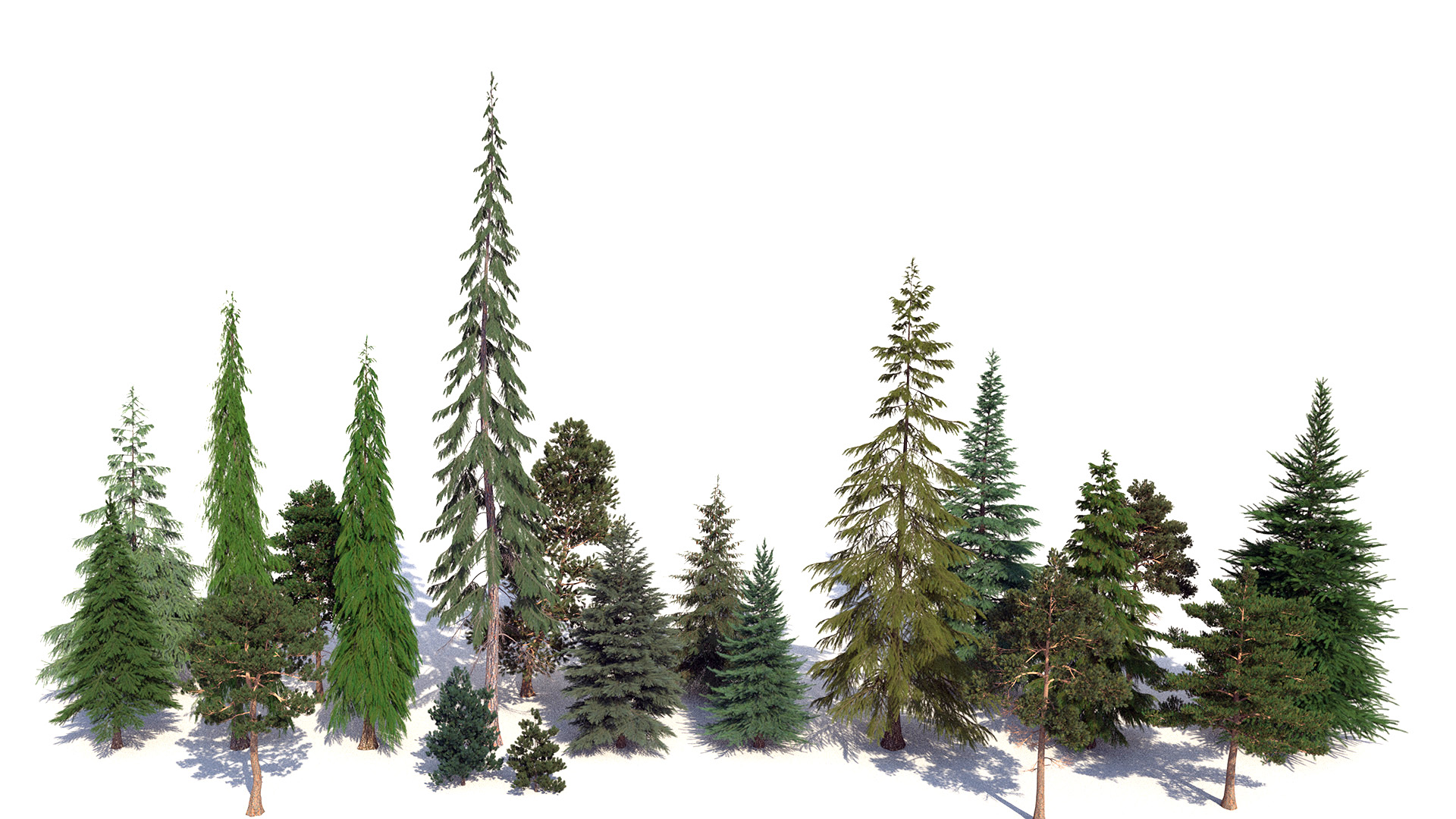 Figure 16: Test render of a lineup of the trees used in the final forest.